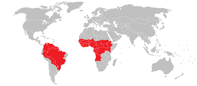 Map of the world with high risk yellow fever locations highlighted in red