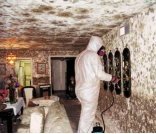 Professional removing mould from walls and ceiling