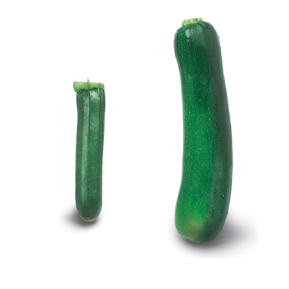 Varieties of zucchini